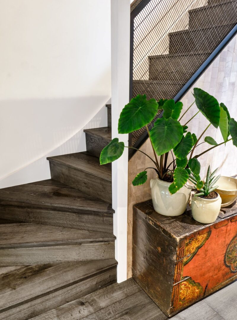 Magma mayon dark textured oak clad staircase with elephant ear plant on antique chest